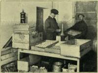 Prześwietlanie jaj / źródło: Zacharski A. - Jajczarstwo i zbiornice jaj przy spółdzielniach mleczarskich. Warszawa 1930