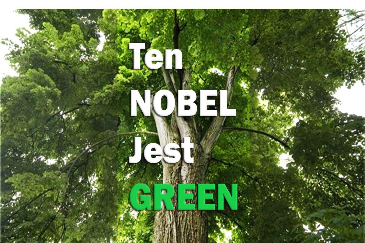 Uwaga konkurs! O drzewach…